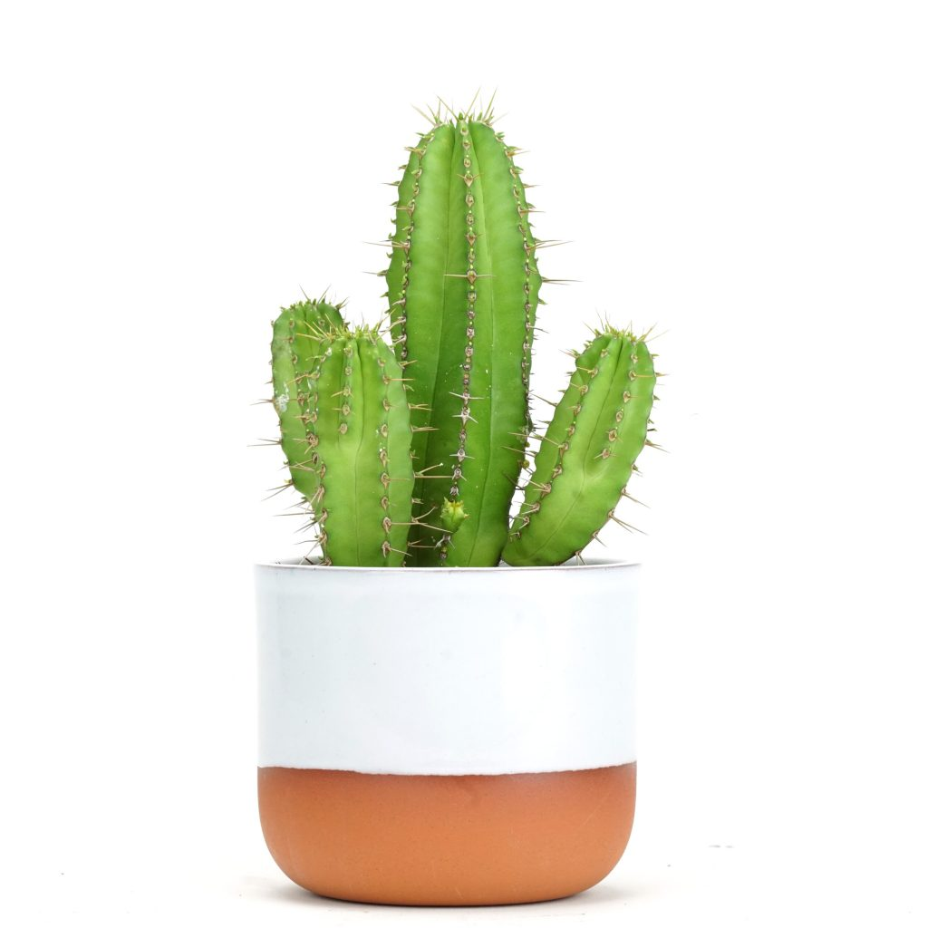 Cactus from Prick London - sustainable christmas gifts
